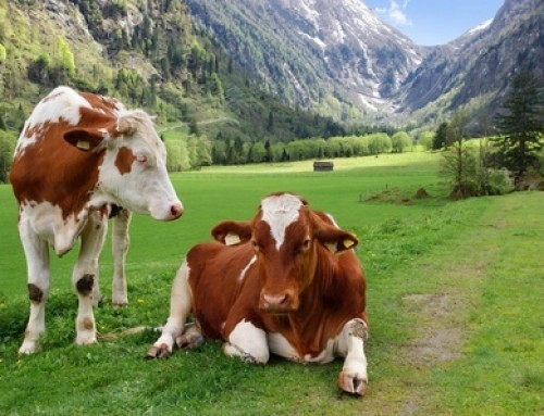 Cow and goat milk estrogen levels | Does it matter?