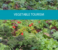 Image of vegetable garden relating to vegetable tourism from CALMERme.com