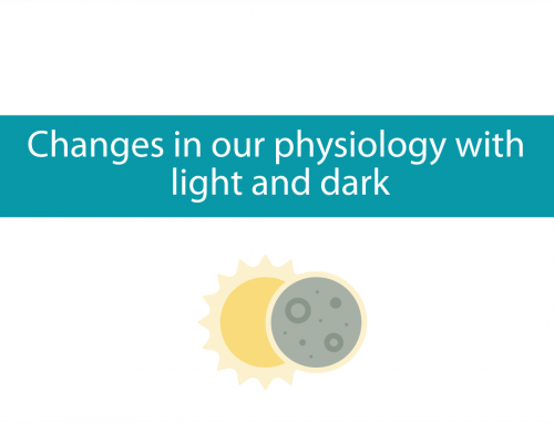 Changes in our physiology during light and dark | Is artificial light disrupting our rhythm?