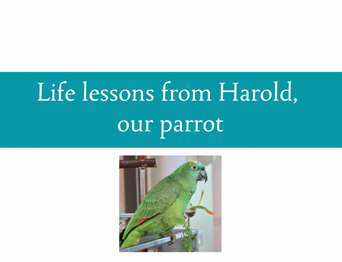 Life lessons from Harold, our parrot