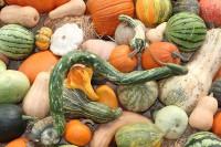 Image of fall vegetables from CALMERme.com