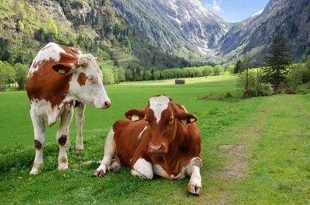 Cow and goat milk estrogen levels | Does it matter?