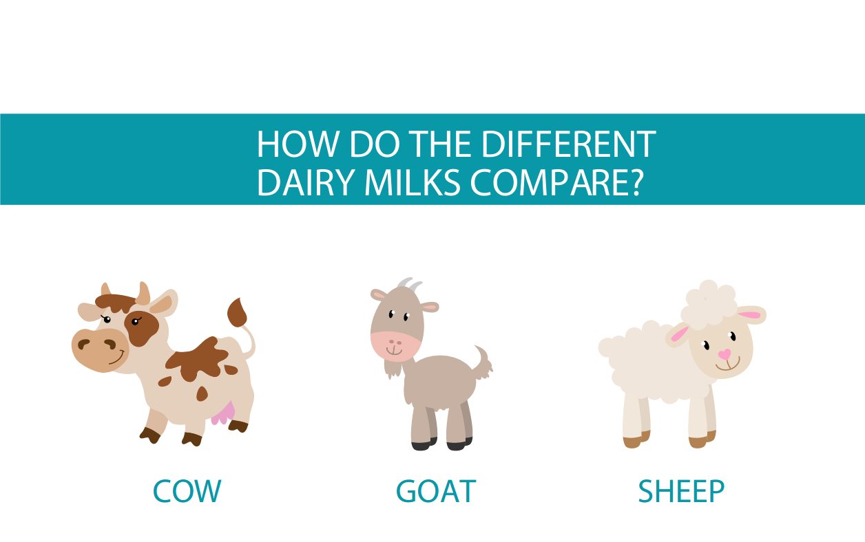 Cow versus goat versus sheep milk | How do the diary milks compare?
