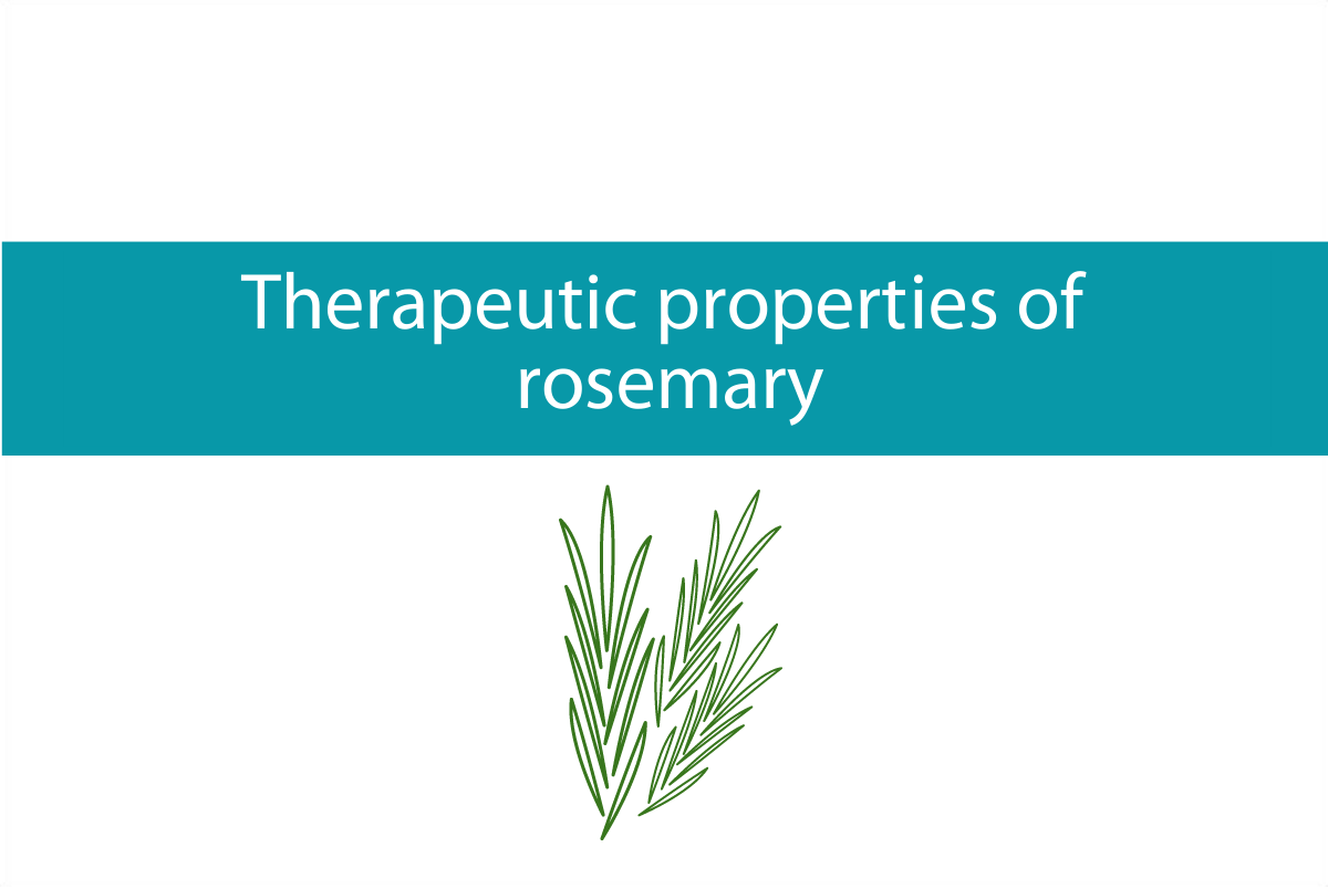 Therapeutic properties of Rosemary | Worth growing in your garden