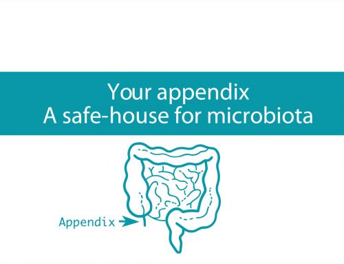 Your appendix: A safe-house for microbiota