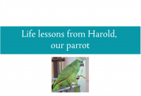 Blogheader for life lessons from Harold our parrot from CALMERme.com